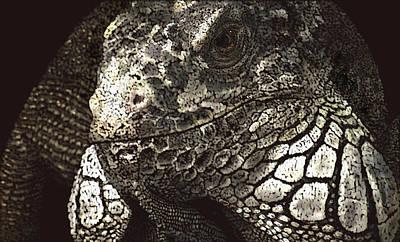 Iguana Poster by Kathie Miller