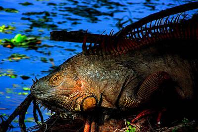 Iguana Sunrise Poster by Mark Andrew Thomas