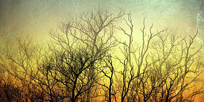 Illuminated Forest Poster by Sharon Lisa Clarke