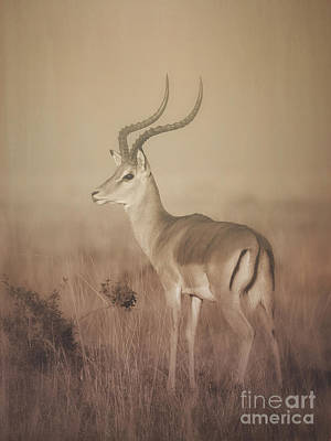 Poster featuring the photograph Impala At Dawn by Chris Scroggins