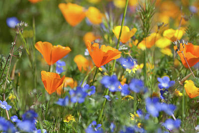 Poster featuring the photograph Impressionist Wildflowers by Cliff Wassmann