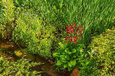 Impressions Of Gardens - A Miniature Spring Creek With A Red Primrose  Poster by Georgia Mizuleva