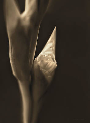 In The Beginning Gladiola Flower Bud Sepia Poster by Jennie Marie Schell