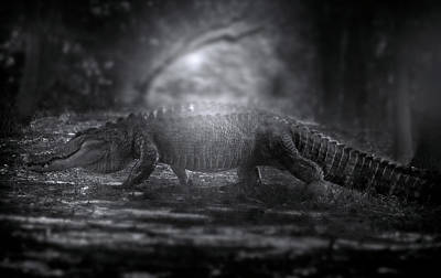 In The Hall Of The Swamp King Poster