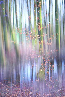 In The Spring Woods. Impressionism Poster