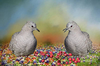 Inca Doves Poster by Bonnie Barry