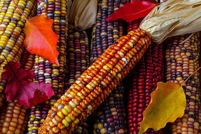 Indian Corn And Autumn Leaves Poster