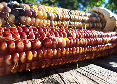 Poster featuring the photograph Indian Corn On The Cob by Shawna Rowe