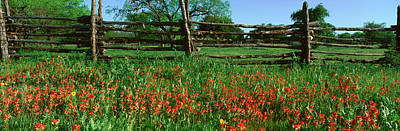 Indian Paint Brush Flowers, Lbj Poster by Panoramic Images