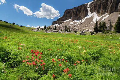 Indian Paintbrush And Cowparsnip Poster