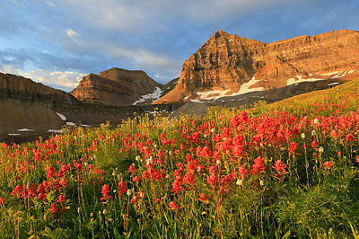 Indian Paintbrush On Timpanogos. Poster