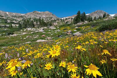 Indian Peaks Summer Wildflowers Poster