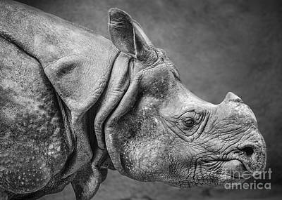 Indian Rhino Profile Poster by Jamie Pham