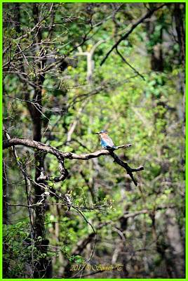 Indian Roller Poster by Sonali Gangane