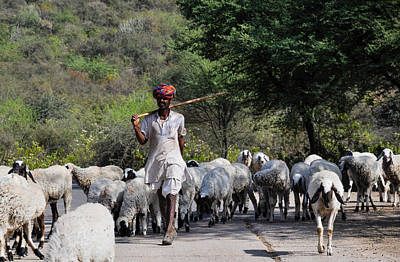 Indian Shepherd Poster by Freepassenger By Ozzy CG