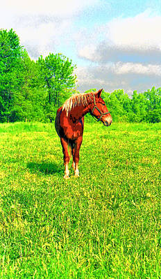 Indiana Horse Image Poster by Paul Price