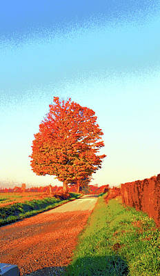 Indiana Sugar Maple Image Poster by Paul Price