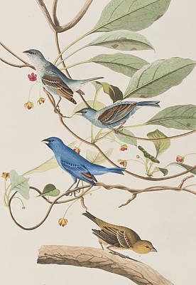 Indigo Bird Poster