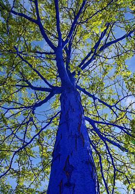 Indigo Tree Poster