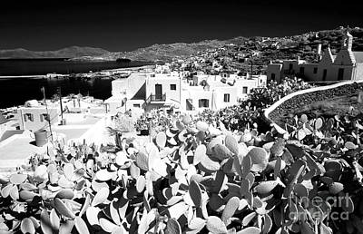Infrared Cactus In Mykonos Poster by John Rizzuto