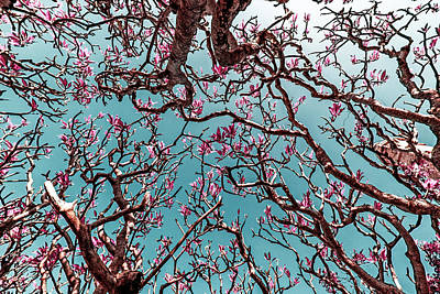 Infrared Frangipani Tree Poster by Stelios Kleanthous
