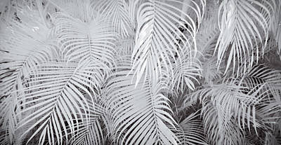 Infrared Palm Abstract Poster by Adam Romanowicz