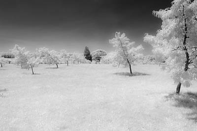 Infrared Peach Orchard Poster