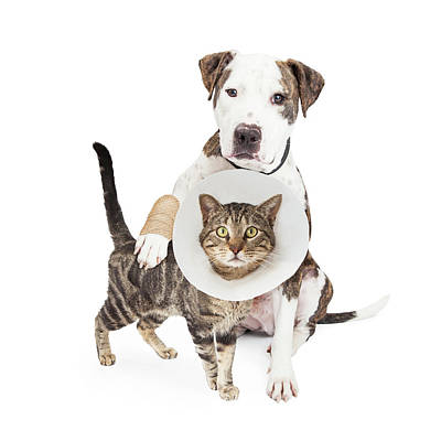 Injured Dog And Cat Together Poster