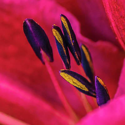 Poster featuring the photograph Inner Lily Macro Two by Julie Palencia