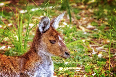 Poster featuring the photograph Inner Peace, Yanchep National Park by Dave Catley