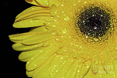 Poster featuring the photograph Innocence By Kaye Menner by Kaye Menner