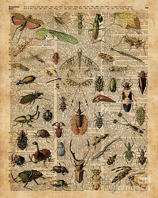 Insects Bugs Flies Vintage Illustration Dictionary Art Poster