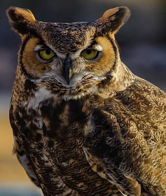 Intense Owl Poster
