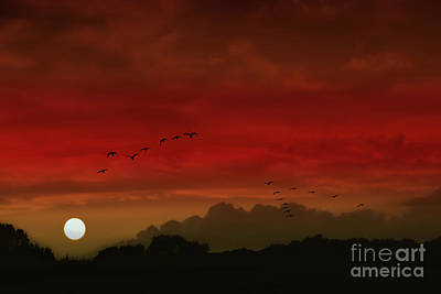 Into A Scarlet Sky Poster by Tom York Images