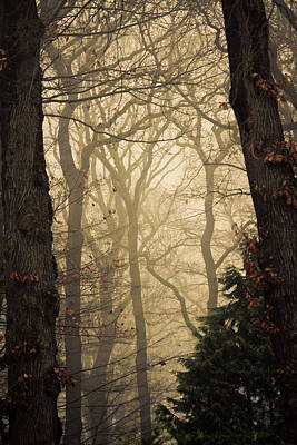 Into The Woods Poster by Alexander Ipfelkofer