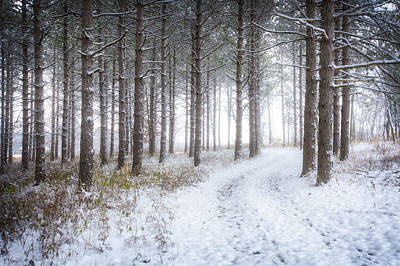 Into The Woods - Winter At Retzer Nature Center  Poster