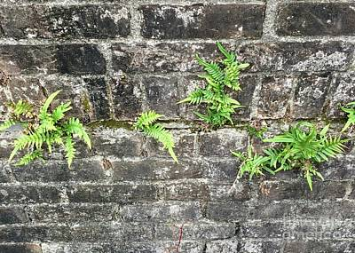 Intrepid Ferns Poster by Kim Nelson