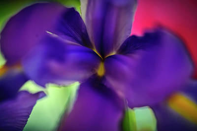 Iris Abstract Poster by Michael Putnam