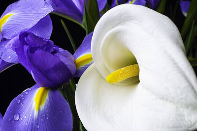 Iris And Calla Lily Poster
