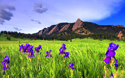 Iris And Flatirons Poster by Scott Mahon