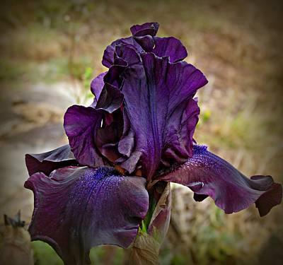 Iris Beauty Poster