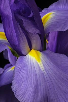 Iris Close Up Poster