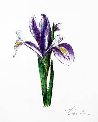 Iris Poster by Danuta Bennett