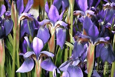 Poster featuring the photograph Iris Fantasy by Benanne Stiens