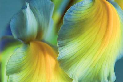 Iris Fantasy Poster