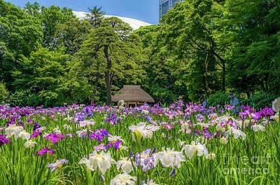 Iris Field In Mid Tokyo Poster