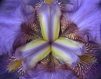 Iris Floral Kaleidoscope Poster by David and Carol Kelly