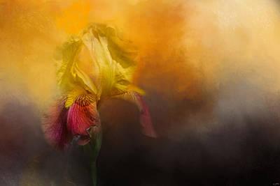 Iris In Miss June's Garden Poster by Jai Johnson