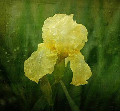Iris In The Rain Poster by Sandy Keeton