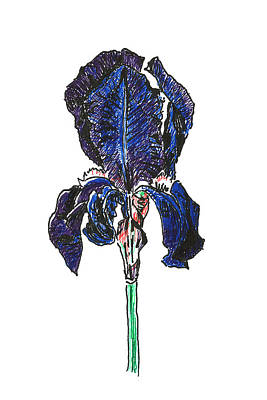 Iris Poster by Masha Batkova
